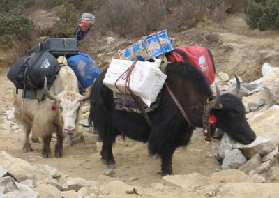 A typical yak load